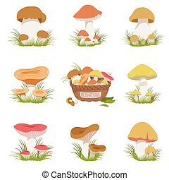 Eatable Mushrooms Realistic Drawings Set - Eatable Mushrooms...