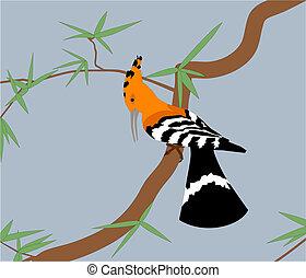 Hoopoe on the tree