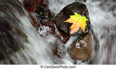 Autumn Scene - Maple leaf resting on a rock in the middle of...