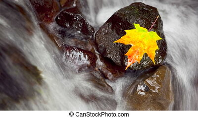 Autumn Scene, time lapse - Maple leaf resting on a rock in...