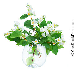Jasmine flowers and leaves twigs in vase isolated on white...