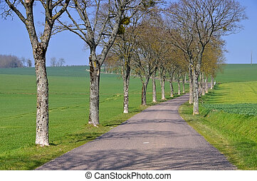 Burgundy, tree-lined road in spring