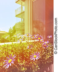 Balcony with blooming daisies in retro light
