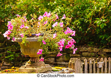 Stone pot with pink flowers