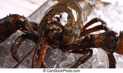 Live lobster on ice cubes. Brown lobster moves his mouth....