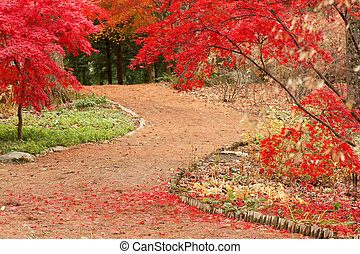 Path and Japanese Maples - Autumn view of garden path and...