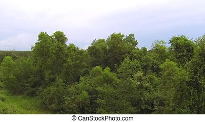 Thai jungle trees, aerial fly by video - Thai jungle trees,...