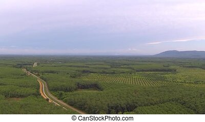 Jungle road and big plantation in Thailand. Aerial video...
