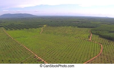 Aerial video of Thai jungle and plantation clip