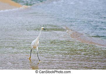 white bird with yellow feet on the sea