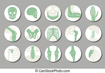 Orthopedic and spine vector icons. Human bone of...