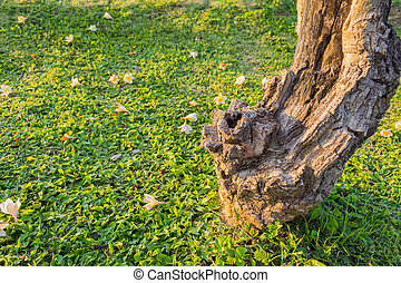 close up shot of plumeria trunk with flower on the ground.
