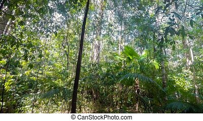 rain forrest north sulawesi, indone - rain forrest in north...