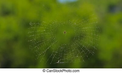 Round Web With Spider At Nature - CLOSE UP Round web with...