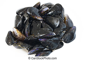 Fresh mussels - group of fresh mussels isolated on white...
