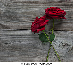 Two red roses on a wooden background - Two elegant red roses...