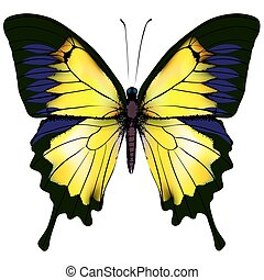 Butterfly. Yellow isolated illustration on white background...