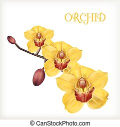 yellow orchid set