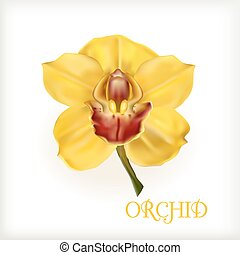 yellow orchid with stem