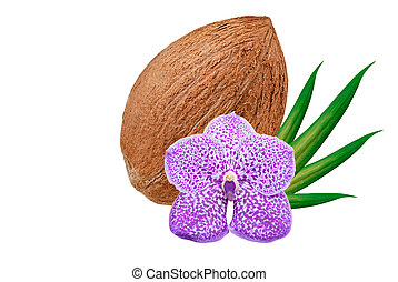 Coconut isolated on white - coconut with flower isolated on...