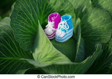 Baby shoes. Newborn, kid art. Beauty child shoes in cabbage. Boy or girl