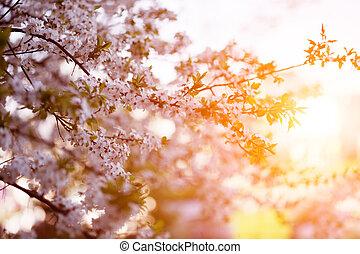 Flowering spring trees Sunset in spring or summer landscape...