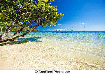 Trees hanging over stunning lagoon with blue sky