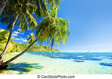 Palm tree hanging over stunning blue lagoon - Palm tree...