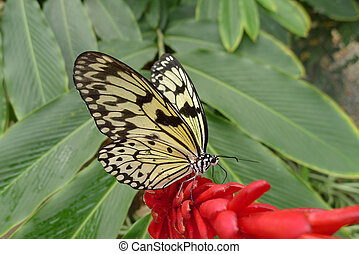 paper kite butterfly on flower