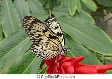 paper kite butterfly on flower