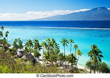 Palm trees on tropical beach in tahiti - Palm trees on...