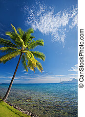 Single palm tree agains blue sky on beach