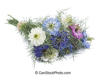 Nigella bouquet on white background
