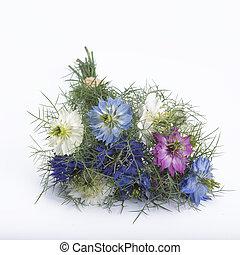 Nigella bouquet on white background