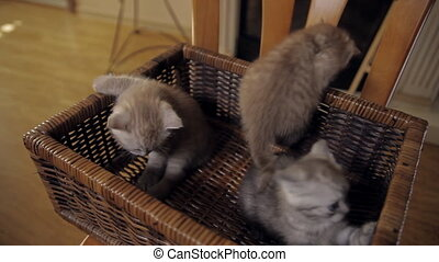 A great escape from prison - Three little kitten with blue...