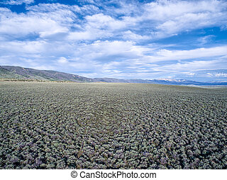 field of sagebrush aerial view - North Park, Colorado at...