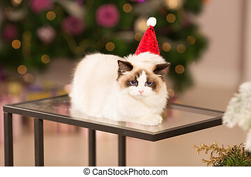 Cat. Christmas party, winter holidays cat with gift box. New...