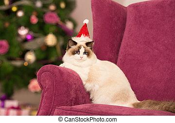 holida, chat, noël, fête, hiver