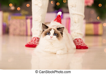 Christmas cat - Cat. Christmas party, winter holidays cat...
