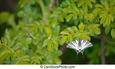 A white butterfly on a leaf - Wow A lovely butterfly is...
