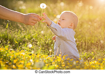 Adult hand holds baby dandelion at sunset Kid sitting in a...