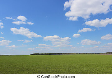 Boundless field - Summer landscape with a view of the...