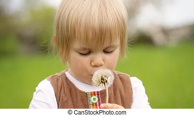 Cute child holding dandelion in her hands and playing with...