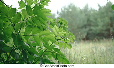Wind blowing vibrant green leaves in full HD
