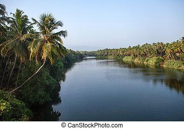 Coconut palm trees along the backwaters of Kerala, India