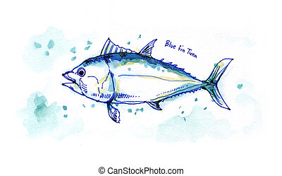 blue fin tuna watercolor painting illustration