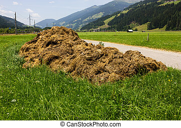 Pile of manure