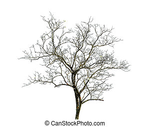 tree in nature photography on white background