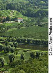Italian fishing pondin wine country - A fishing pond is...