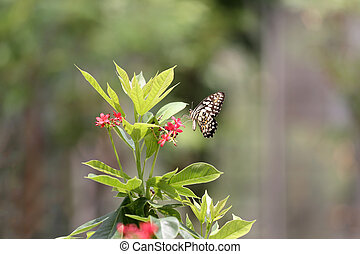 Tropical Insect of butterfly perched on a treetop in public...